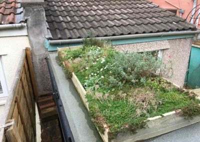Roof Garden (one year on)